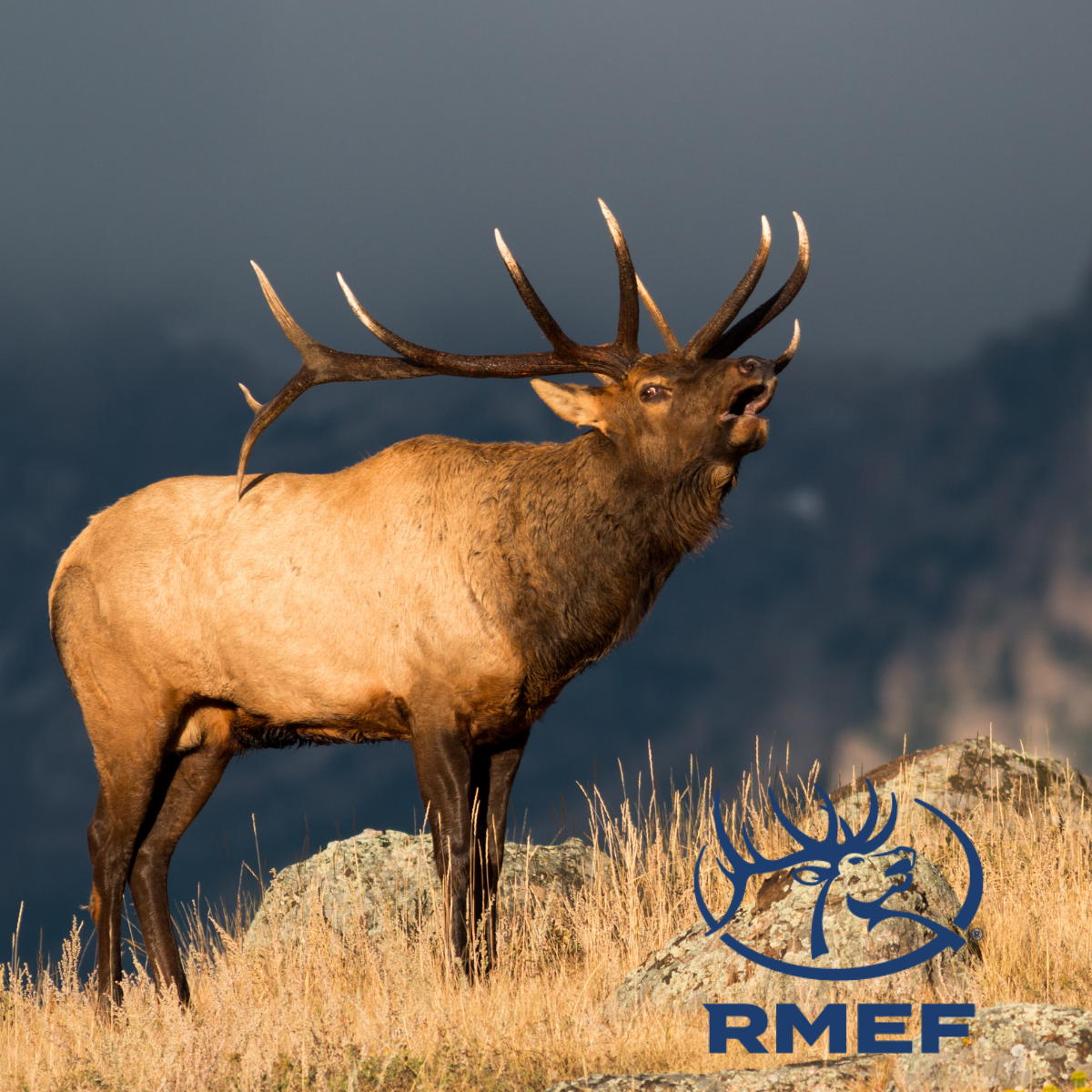 July 10, 2021: Discount Fishing Tackle – Outdoor Buddies – Quick Draw Archery – RMEF Annual Banquet Aug. 28, 2021