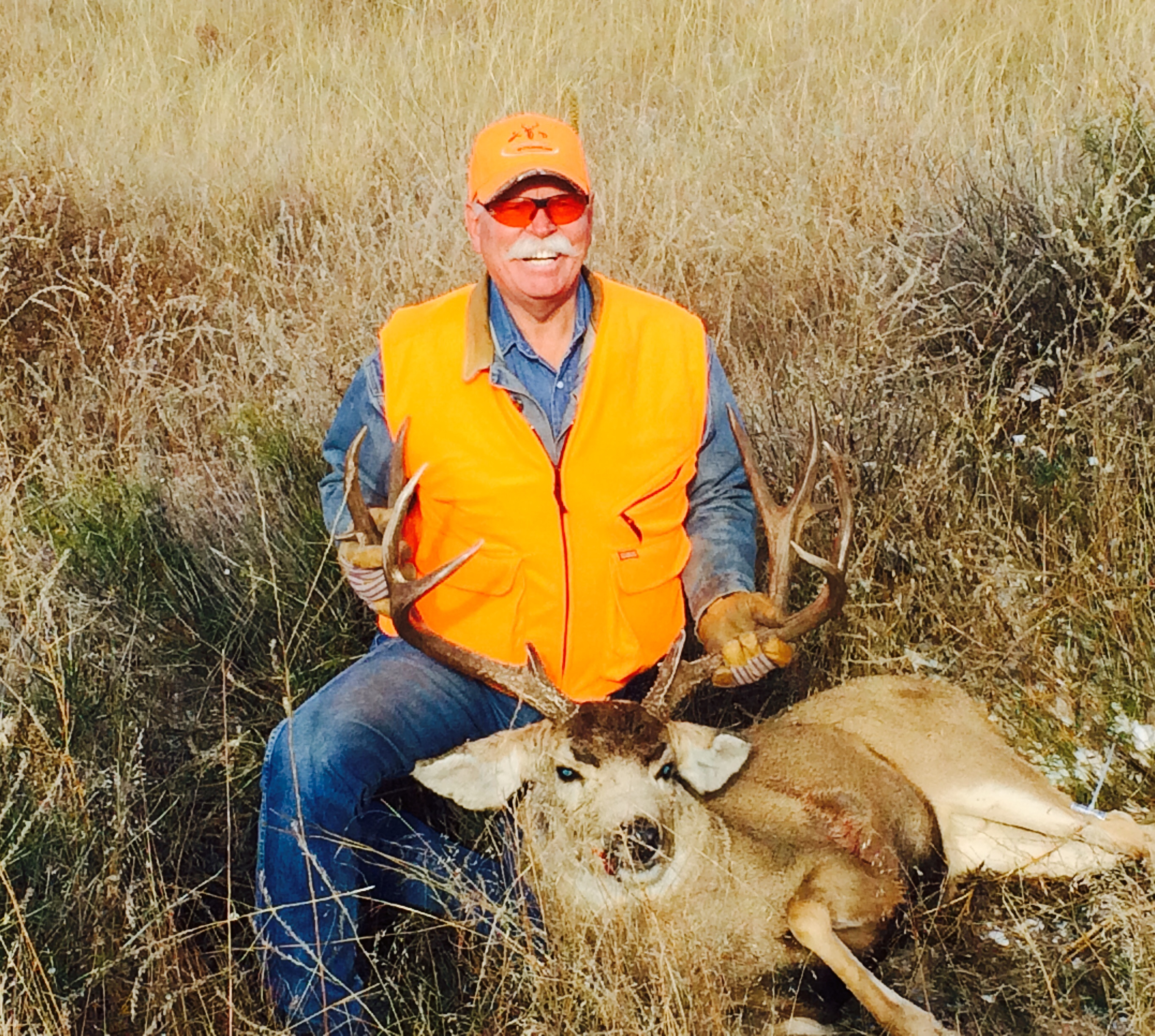 Sedalia, Colorado – Mule Deer