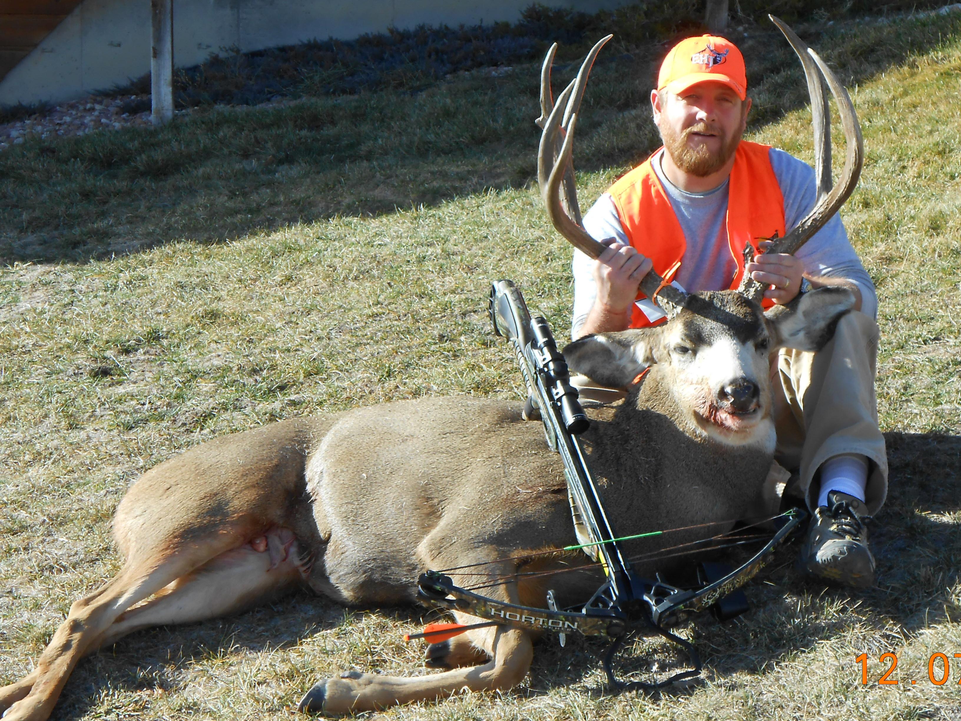 Parker-Mule Deer