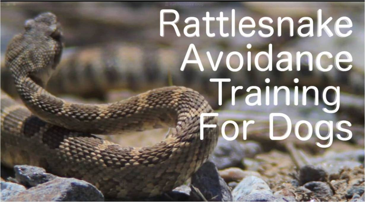 May 13: Snake Avoidance Clinic for Dogs- Big Game Forever – Phoenix Weaponry