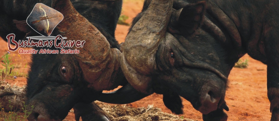 bushmans-quiver-testimonial