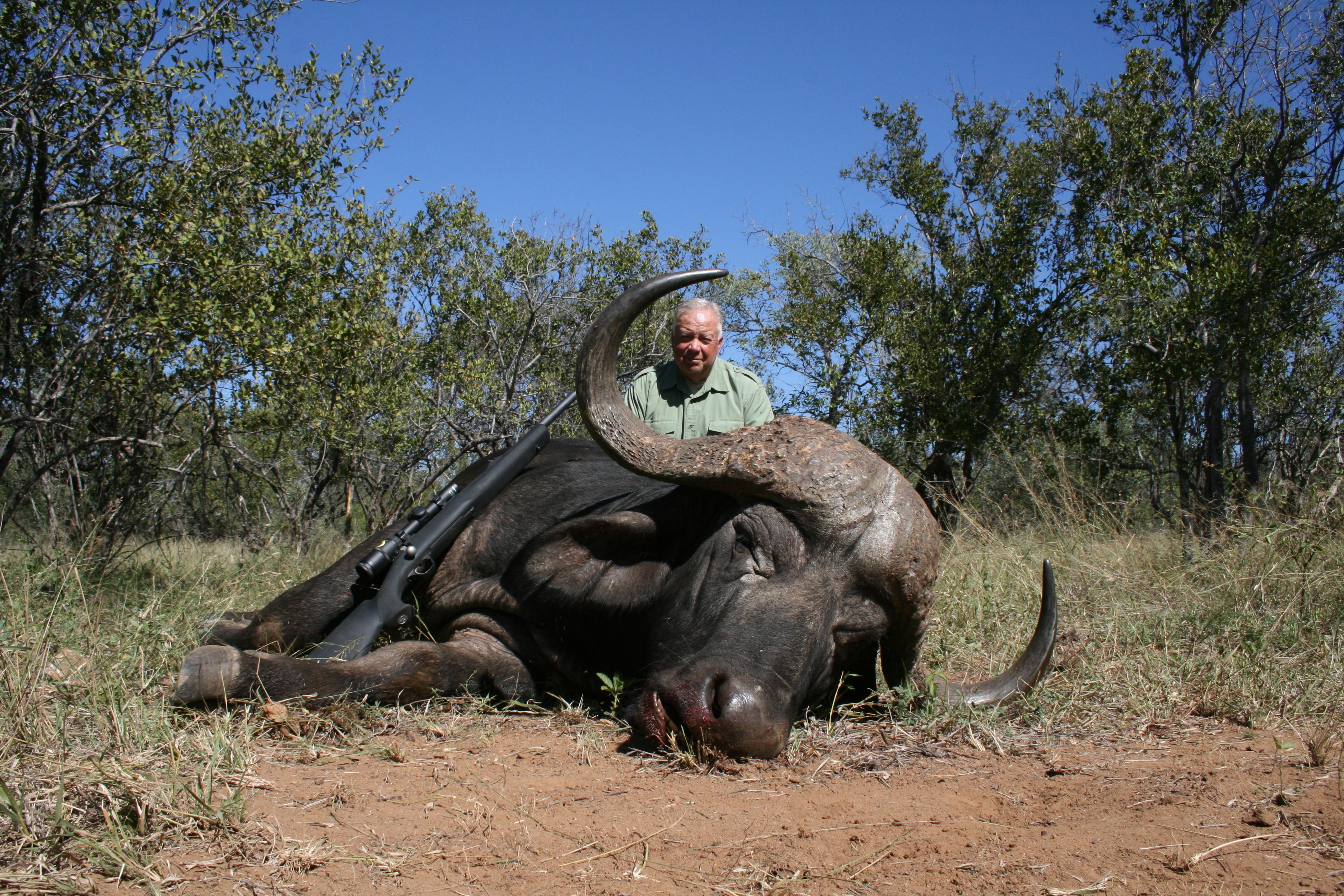 Africa-Cape Buffalo