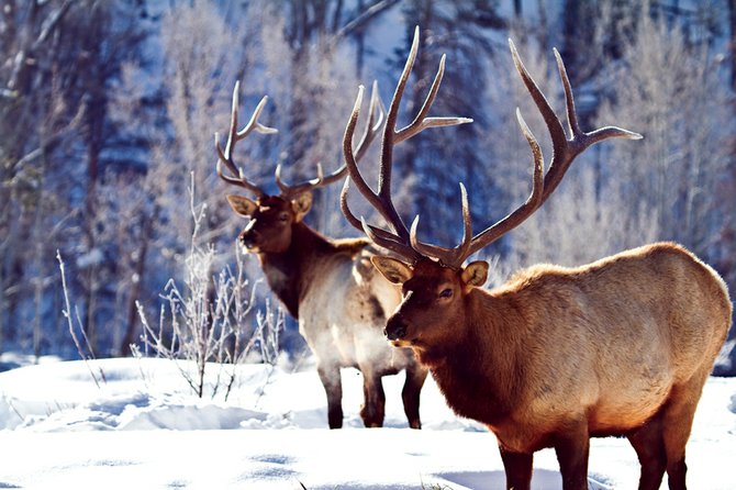 Finding an Elk Hunt Outfitter